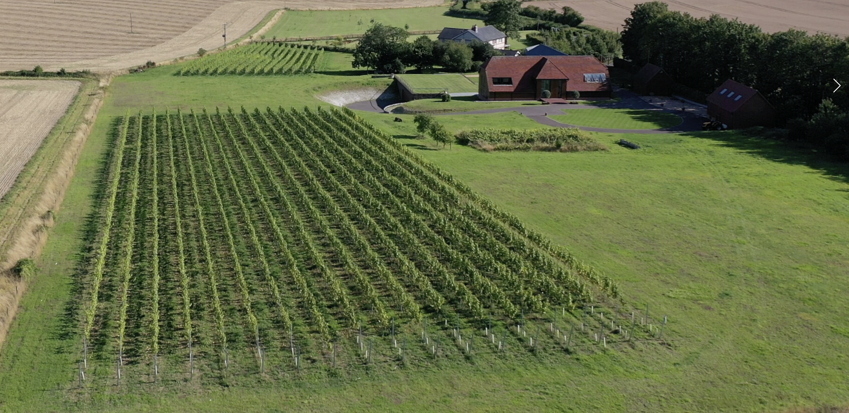 The beautiful Lone Farm and their vineyard