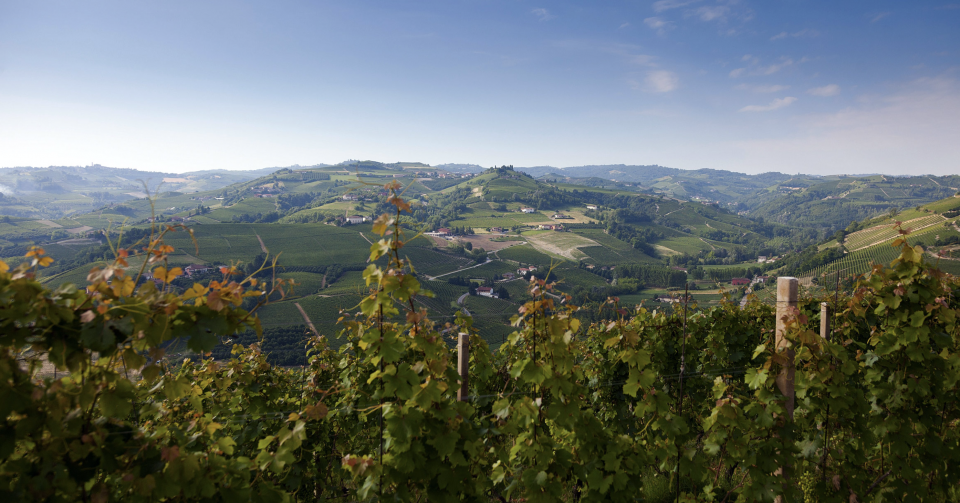 View from the Vineyard